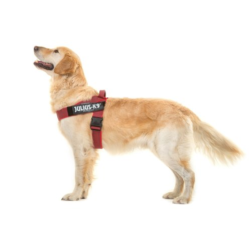 IDC® Color & Gray® belt harness