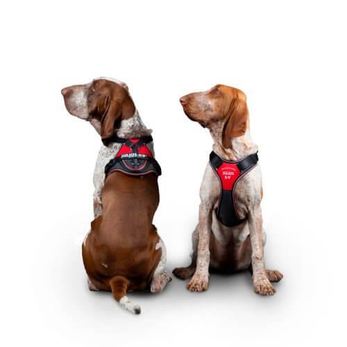 IDC®Longwalk kutyahám